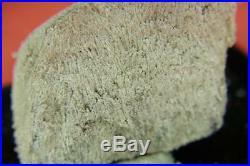 Solid Silver/Dendrites on Arsenic Pöhla / Erzgebirge Nugget/Specimen ged. S24
