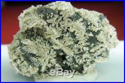 Solid Silver/Dendrites on Arsenic Pöhla / Erzgebirge Nugget/Specimen ged. S25